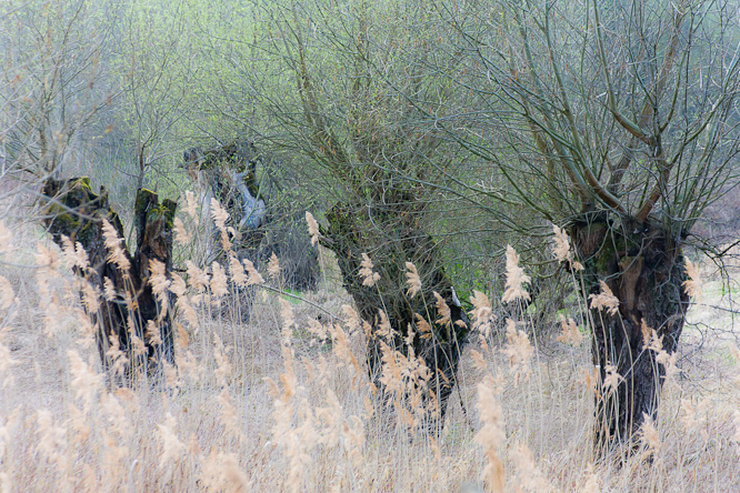 Fotografie aus der Serie »Local Nature Reserves«